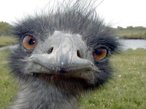 funny-ostrich-pictures
